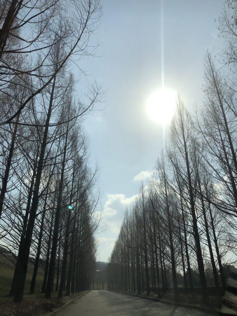 太陽が丘 並木道